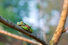 Free The Young Frog Stock Images - 30584774