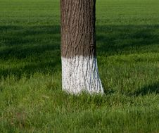 Free Tree Trunk Stock Image - 30585151