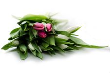 Free Bouquet Of Tulips Royalty Free Stock Photos - 30589028