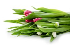 Free Bouquet Of Tulips Royalty Free Stock Image - 30589076