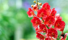 Free Orchid Stock Image - 30589481