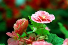 Free Flower Royalty Free Stock Image - 30589886