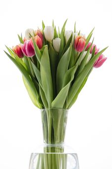 Free Tulips Stock Photo - 30589930