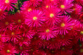 Free Flower Royalty Free Stock Image - 30591826