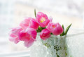 Free Pink Tulips In The Lace Box Stock Photography - 30597792