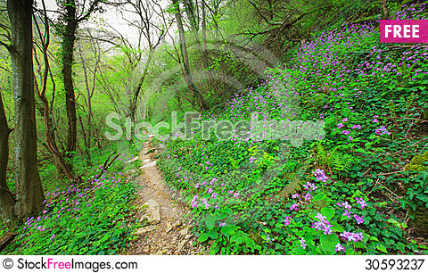 Free Wild Flowers In A Mountain Forest In Spring Royalty Free Stock Photography - 30593237