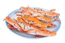 Free Steam Food Crab On Dish Royalty Free Stock Photo - 30590685