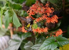 Free Butterfly On A Flower Stock Images - 30590954