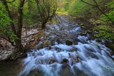 Free Mountain Stream And Waterfalls In The Forest In Spring Royalty Free Stock Photo - 30591105