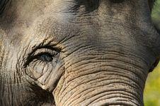 Free Elephant Stock Image - 30593431