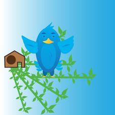 Free Blue Bird Stock Photos - 30594833