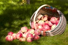 Free Basket Of Apples Royalty Free Stock Photography - 30595217