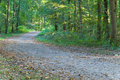 Free Footpath In The Park/forest Royalty Free Stock Image - 3060166