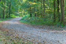 Footpath In The Park/forest Royalty Free Stock Image