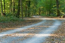 Footpath In The Park/forest Stock Photos