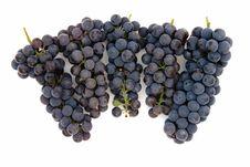 Free Dark Grape Royalty Free Stock Photos - 3060778