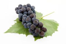 Free Dark Grape With Leaf Royalty Free Stock Image - 3060816