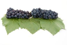 Free Dark Grape With Leaf Royalty Free Stock Photography - 3060957