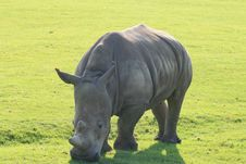 Free Rhino Stock Images - 3060984