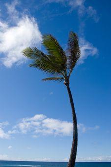 Free Palm Tree Royalty Free Stock Photo - 3063235