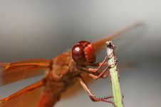 Free Good Looking Dragon Stock Image - 3063271