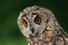 Free Looking Owl Stock Photos - 3064453