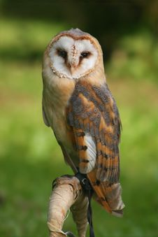 Free Owl On Post Stock Images - 3064484