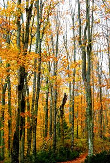 Free Tall Autumn Trees Stock Photo - 3064610