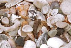 Free Sea Shells Background Stock Photos - 3068303