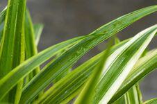 Free Grass Blades Closeup Stock Photos - 3069503