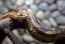 Free Snake In City Zoo Stock Image - 30602041
