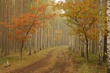 Free Autumn. Stock Images - 30605434
