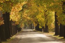 Free Road In The Autumn. Stock Photo - 30605610