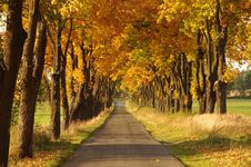 Road In The Autumn. Stock Image