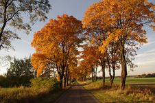 Road In The Autumn. Stock Photography