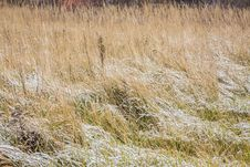 Free Snow Covered Grass In Meadow Royalty Free Stock Photo - 30609255