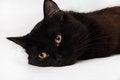 Free Black Cat Royalty Free Stock Photo - 30610655