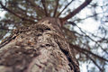 Free The Bark Of The Tree Close Up Stock Photography - 30611572