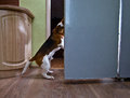 Free Dog In Kitchen Stock Photo - 30615860