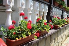 Free Flower Decorated Terrace Of A House Royalty Free Stock Photography - 30610677
