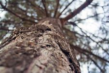 The Bark Of The Tree Close Up Stock Photography