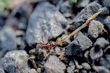 Free Ant Royalty Free Stock Image - 30613266