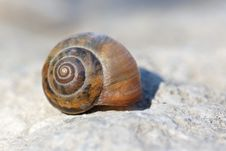 Free Snail Stock Photography - 30614972
