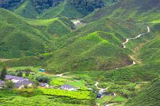 Free Tea Plantation Stock Images - 30617944