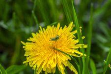 Free Grasshopper Royalty Free Stock Photo - 30621015