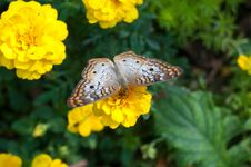 Free Butterfly Stock Photos - 30624583