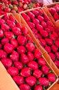 Free Strawberry Stock Photography - 30632462