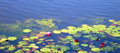 Free Water Lilies On A Pond Stock Photos - 30634833