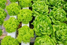 Free Green Vegetable Royalty Free Stock Image - 30633006
