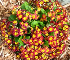 Free Orange Red Flower Beds Stock Photography - 30634162